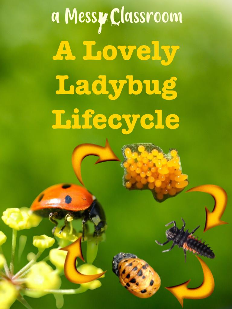 A Lovely Ladybug Lifecycle's Ebook Image